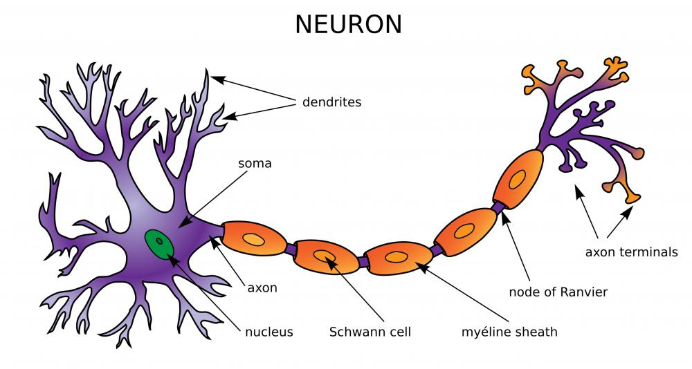 Neural networks are made up of thousands or millions of individual neurons.